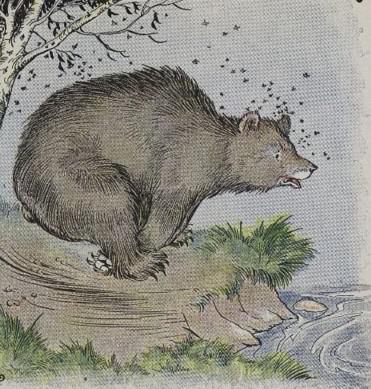 الدب وسرب النحل